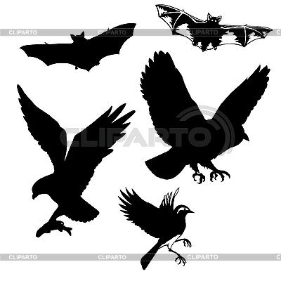 Birds and bats | Stock Vector Graphics |ID 3115947