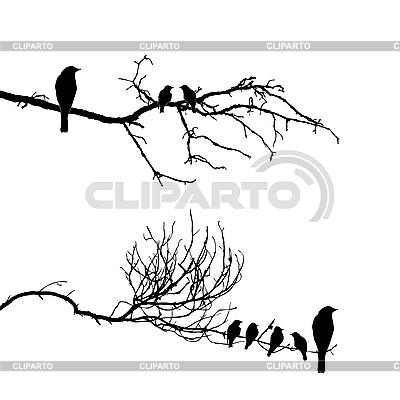 Silhouette der Vögel auf einem Ast   Stock Vektorgrafik  ID 3202000