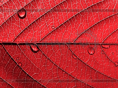 Red leaf with drops | High resolution stock photo |ID 3249350