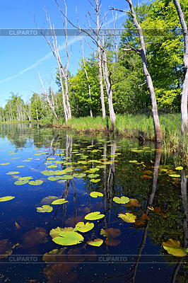 Green water lilies on small lake | High resolution stock photo |ID 3252079