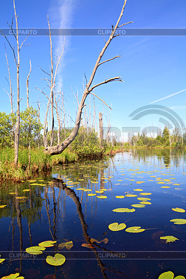 Green water lilies on small lake | High resolution stock photo |ID 3252080