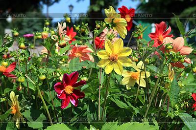 Flowerses w ogrodzie | Foto stockowe wysokiej rozdzielczości |ID 3255268