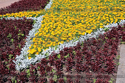 Flowerses on lawn | High resolution stock photo |ID 3255518