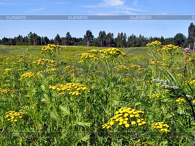 Żółtym polu jesienią | Foto stockowe wysokiej rozdzielczości |ID 3263626