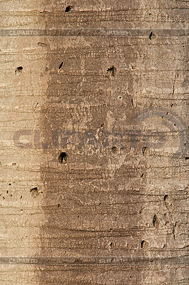 Bark of palm tree | High resolution stock photo |ID 3133760