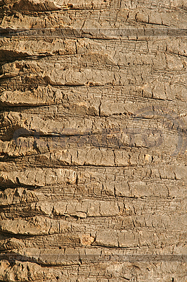 Bark of palm tree | High resolution stock photo |ID 3133761