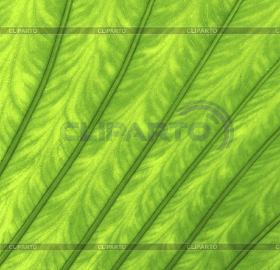 Texture of green leaf as background | 高分辨率照片 |ID 3116940