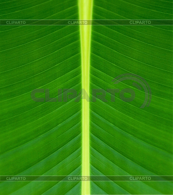 Texture of green leaf background | High resolution stock photo |ID 3239478