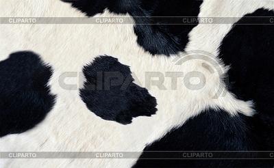 Prawdziwe czarno-białe skóry bydlęcej | Foto stockowe wysokiej rozdzielczości |ID 3239852