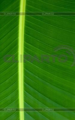 Texture of green leaf | Foto stockowe wysokiej rozdzielczości |ID 3241441