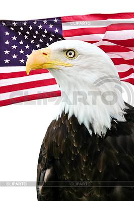 Bald eagle with American flag | High resolution stock photo |ID 3242211
