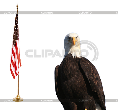 Bald eagle with American flag | High resolution stock photo |ID 3242753