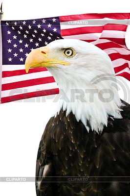 Bald eagle with American flag   高分辨率照片  ID 3243091