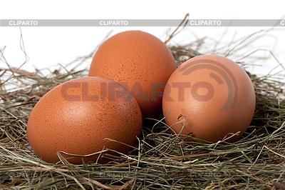 Jaja kurze w gnieździe | Foto stockowe wysokiej rozdzielczości |ID 3196774