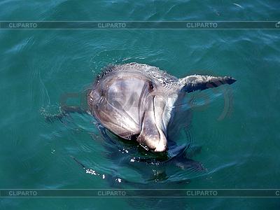 Dolphin   High resolution stock photo  ID 3126119
