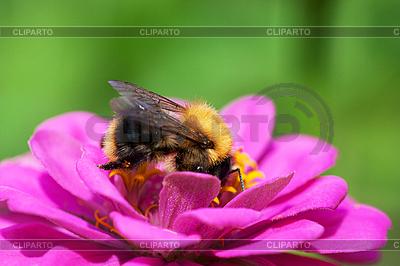 Bee on flower | High resolution stock photo |ID 3150497