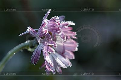 Frozen flower   High resolution stock photo  ID 3150928