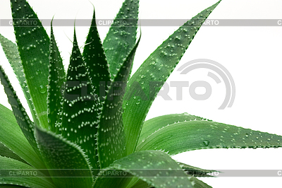 Green leaves | High resolution stock photo |ID 3150946