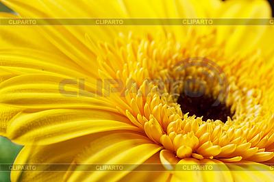 Serce z kwiatów | Foto stockowe wysokiej rozdzielczości |ID 3151039