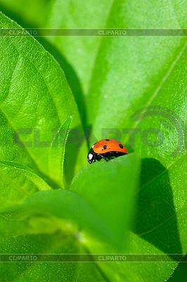 Ladybug | High resolution stock photo |ID 3151114