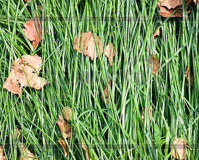 Laid grass | High resolution stock photo |ID 3151118