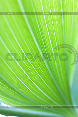 Green leaf background | High resolution stock photo |ID 3151126