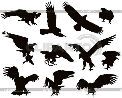 老鹰 | 向量插图 |ID 3351045