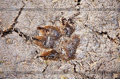 Animal footprint | Foto stockowe wysokiej rozdzielczości |ID 3148264