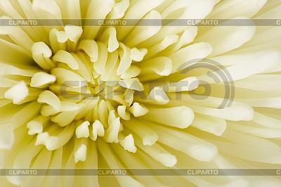 과꽃 | 높은 해상도 사진 |ID 3153887