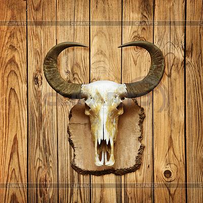 Buffalo Schädel auf Holzwand   Foto mit hoher Auflösung  ID 3304819