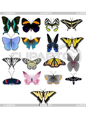 Kolekcja pięknych motyli | Klipart wektorowy |ID 3146044