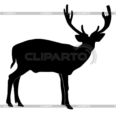 Hirsch | Stock Vektorgrafik |ID 3146062