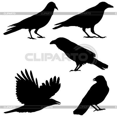 Ворона мультяшная картинки 1