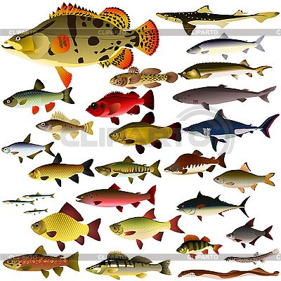 Collection of fish | Stock Vector Graphics |ID 3197194