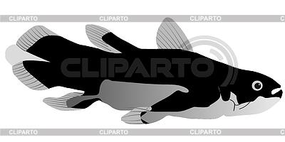 Laminaria | Stock Vector Graphics |ID 3234114