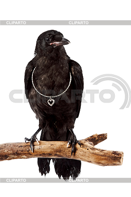 Black bird sits on branch with silver heart | High resolution stock photo |ID 3298279