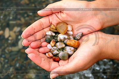 Muszle w rękach | Foto stockowe wysokiej rozdzielczości |ID 3169400