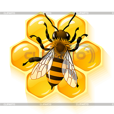 Bee and honeycombs | Stock Vector Graphics |ID 3198529
