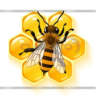 꿀벌과 벌집 | 벡터 클립 아트 |ID 3198529
