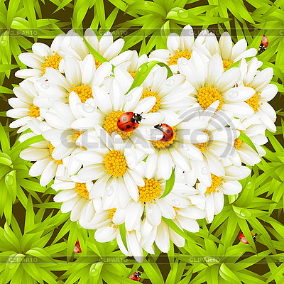 Camomile Heart, ladybugs and seamless background | Stock Vector Graphics |ID 3198531