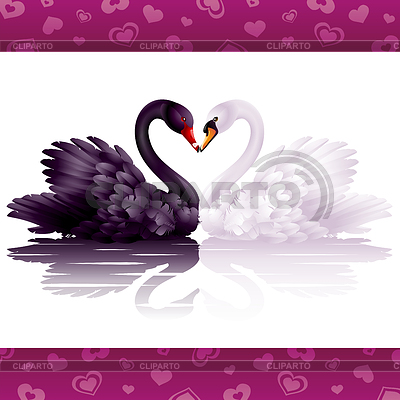 Two graceful swans in love | Stock Vector Graphics |ID 3235788