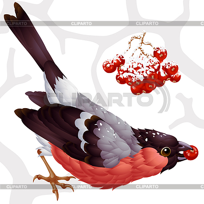 Gil i ashberry | Klipart wektorowy |ID 3271270