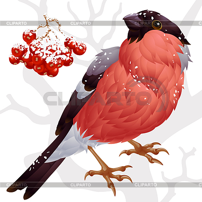 Bullfinch and ashberry | Stock Vector Graphics |ID 3293884