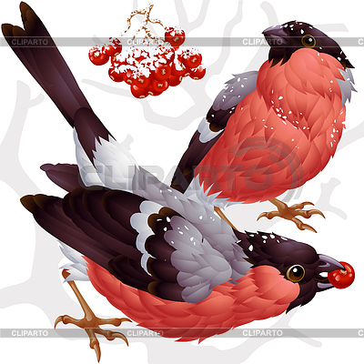 Bullfinch and ashberry | Stock Vector Graphics |ID 3293886