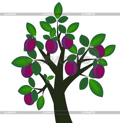Dekorative Pflaumenbaum mit reifen Früchten | Stock Vektorgrafik |ID 3328587