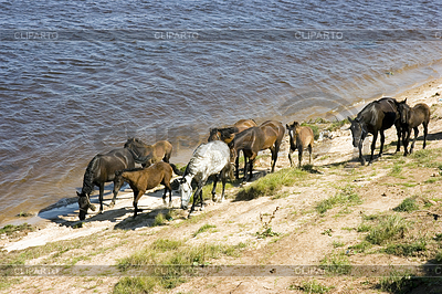 Grazed on river bank herd of horses | High resolution stock photo |ID 3212929