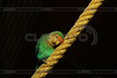 Canary bird | High resolution stock photo |ID 3226392