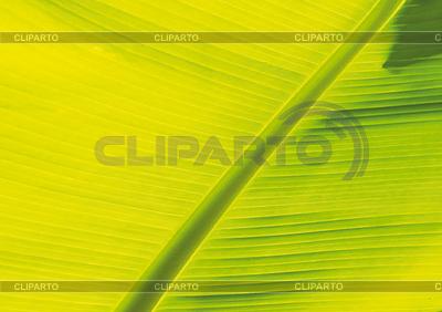 叶香蕉树   高分辨率照片  ID 3229354
