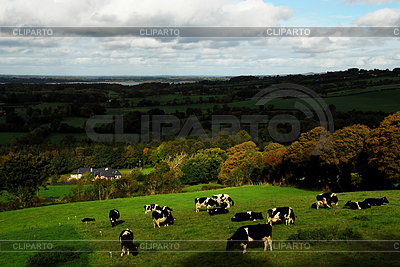 Cattle on pasture | High resolution stock photo |ID 3233144
