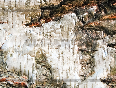 Birch background | High resolution stock photo |ID 3223631